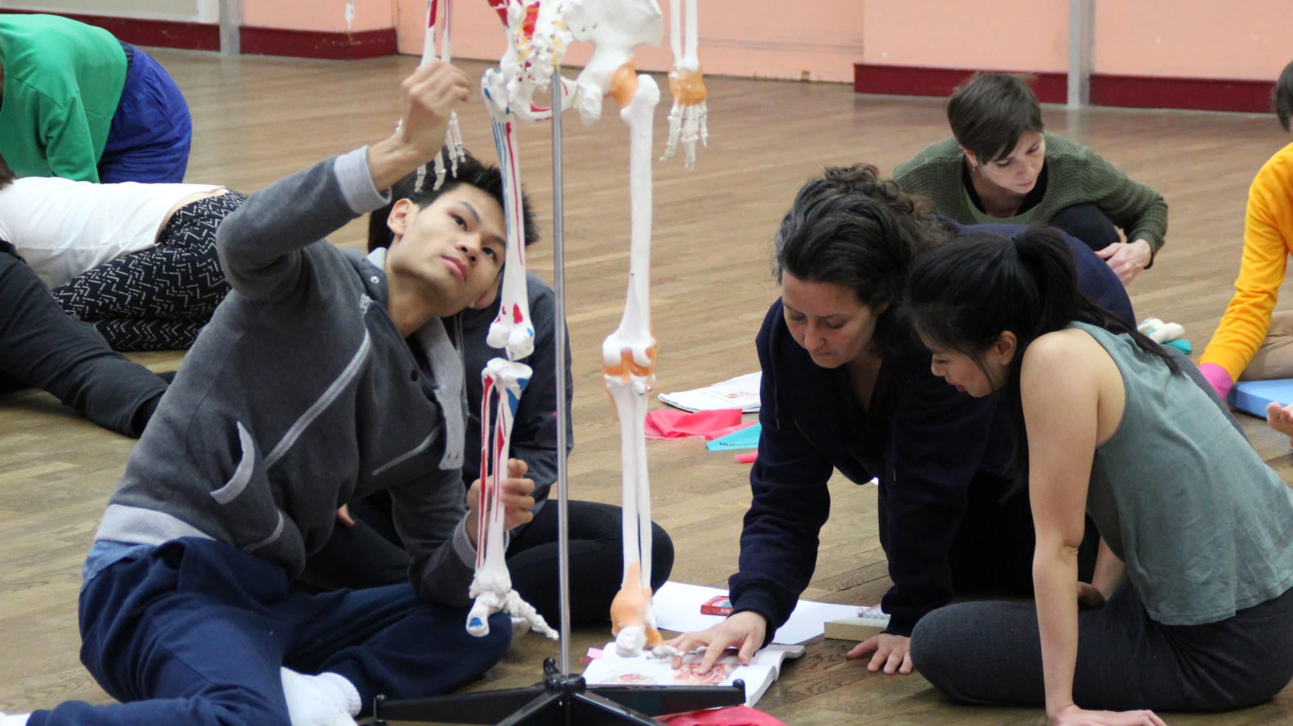 etude de l'anatomie